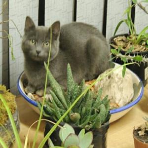 """""""Critter"""" or """"Master Gardener"""" ... you decide :-)"""