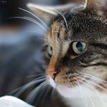 My oldest pussycat