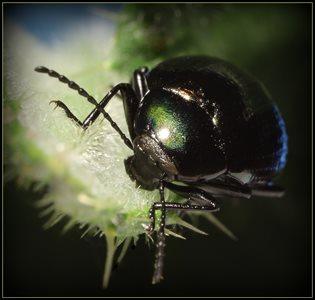 Mr. B Bug.