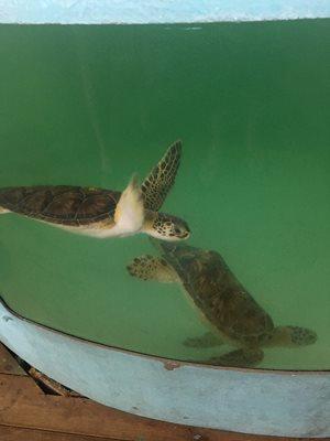 Sea turtles! So cute!!