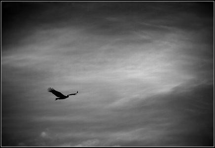 El Condor Pasa.