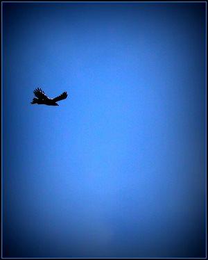 Eddie, the Eagle.