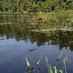 Serenity/paddling